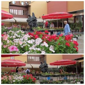 Mercado Dolac - Feira de flores